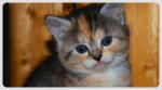 OMG – Kittens!*